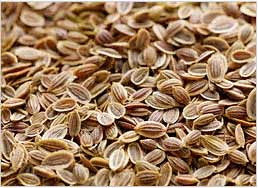 dill-seeds