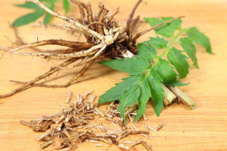 valerian-root