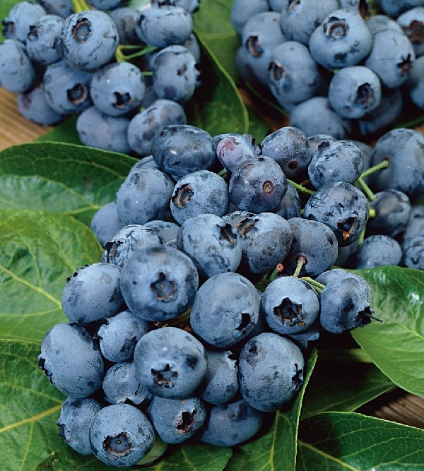 Blueberry-Blast_172228_2